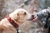 Hond, Snuffel