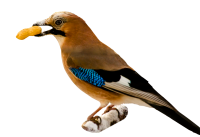 Vogel, pelpinda